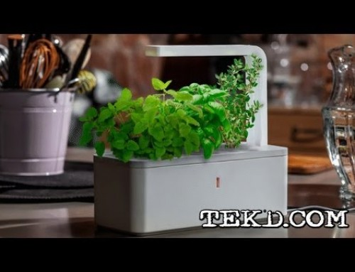Easily Grow Indoors with a Click & Grow Smart Flowerpot System